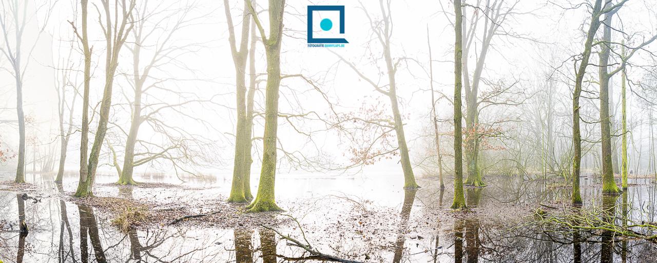 Bos onder water - panorama