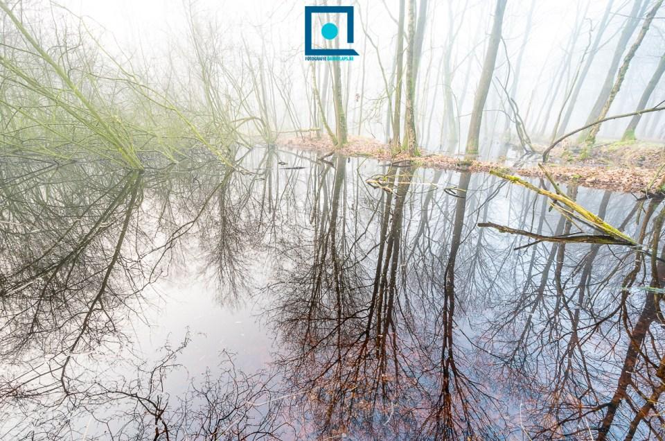 Bos onder water II met panorama