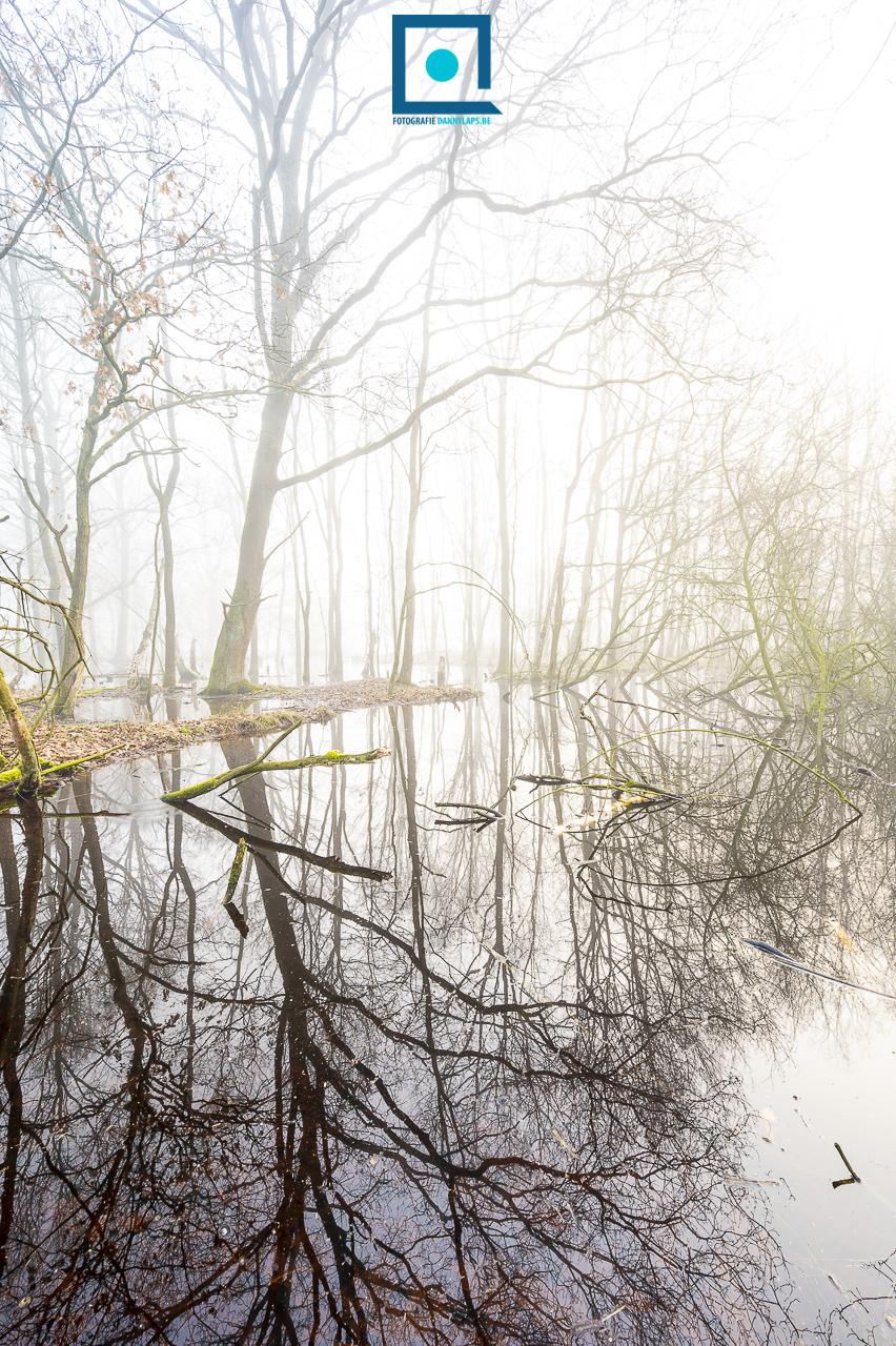 Bos onder water