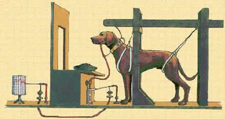 Image result for pavlov dog cartoon facebook