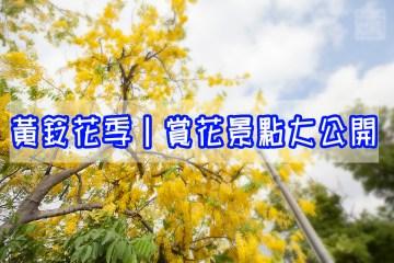嘉義旅遊|嘉義黃鈴花賞景點大公開