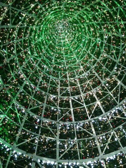Inside the UK's largest Christmas tree