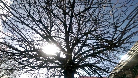 MySundayPhoto - Sunshine through the trees - Boston
