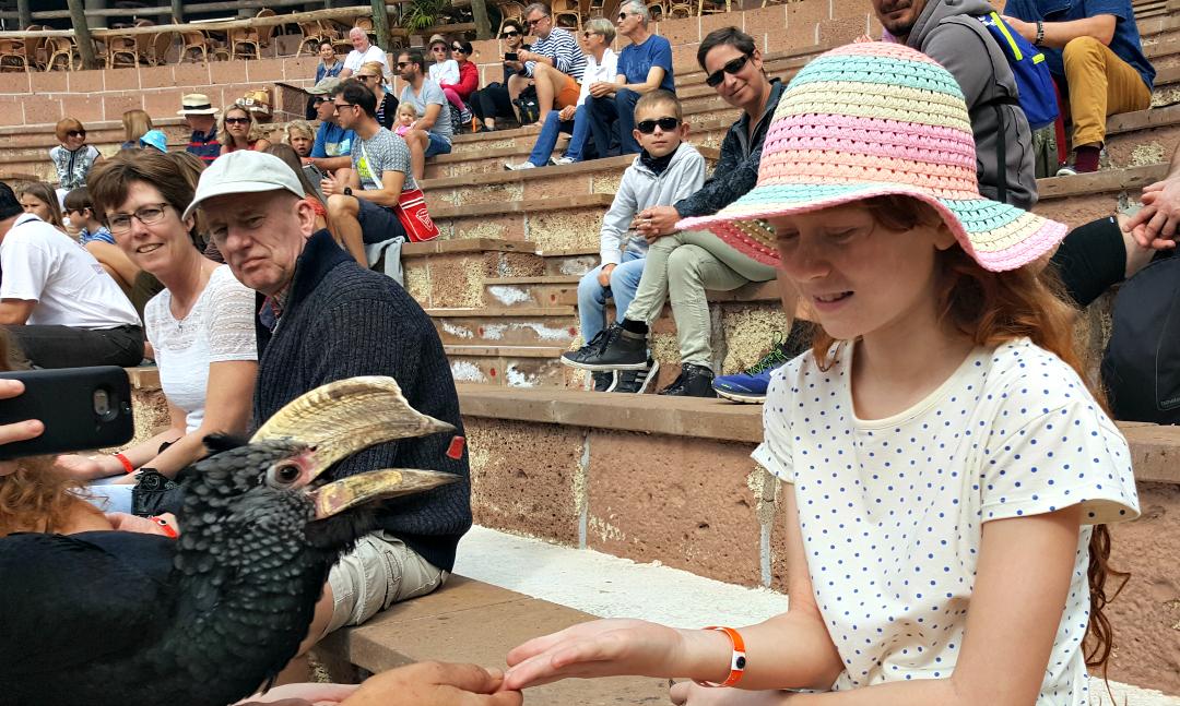 Feeding the birds at the exotic bird show