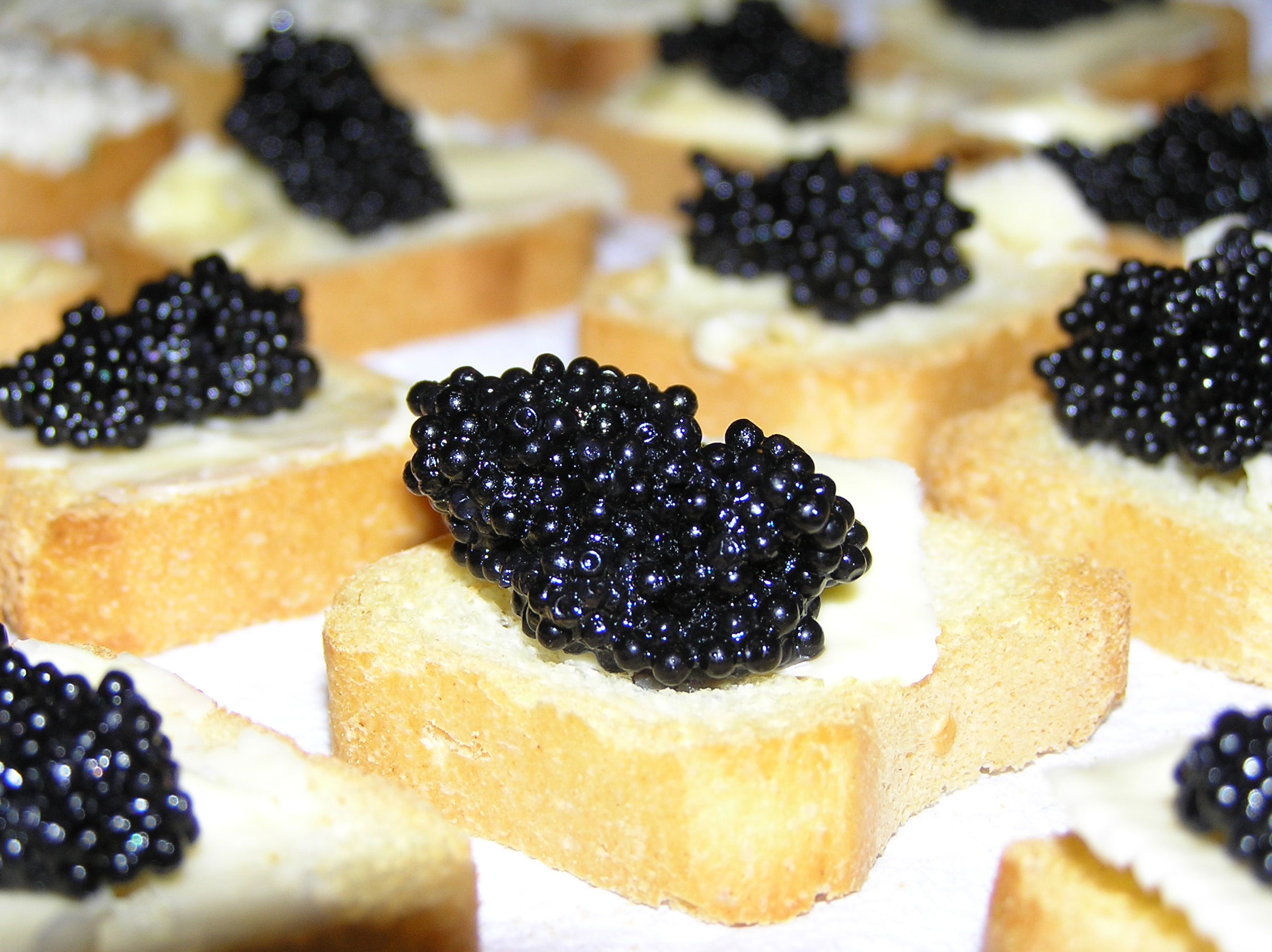 Programa 48 - caviar