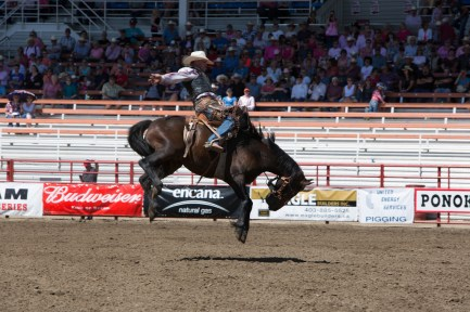 Panoka Rodeo 719