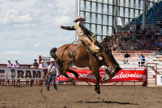 Panoka Rodeo 799