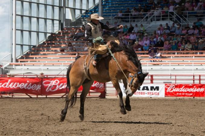 Panoka Rodeo 800