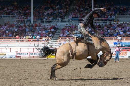 Panoka Rodeo 825