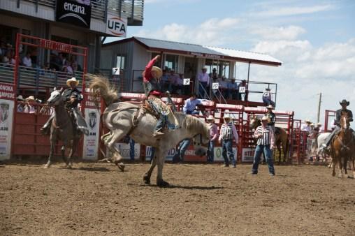 Panoka Rodeo 849