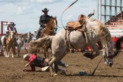 Panoka Rodeo 851