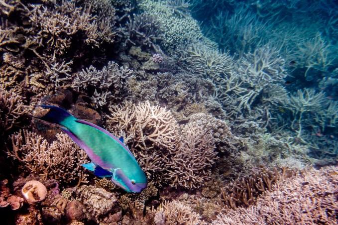 great_barrier_reef-14