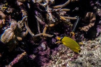 great_barrier_reef-31