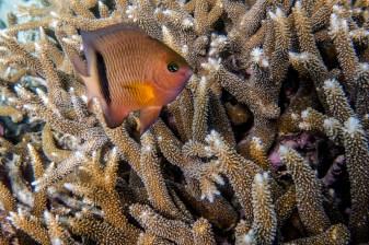 great_barrier_reef-33