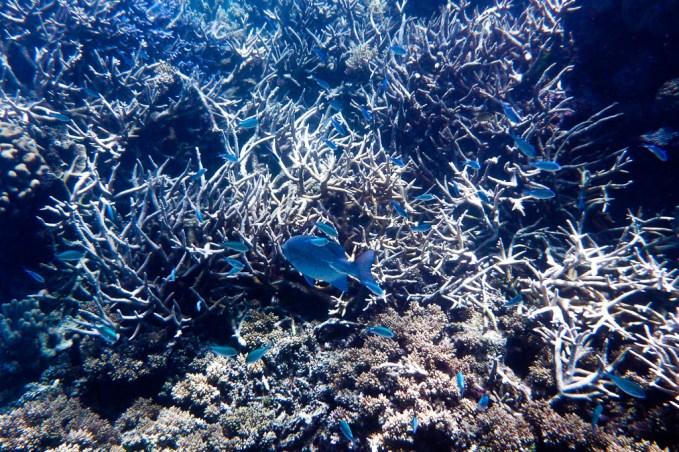 great_barrier_reef-38
