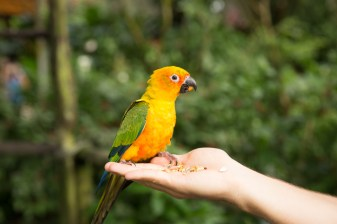 kuranda_birds_butterflies-22