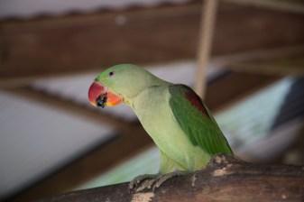kuranda_birds_butterflies-29