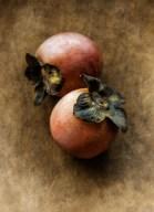 persimmon-still-life