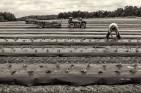 walker_planting-strawberries_01