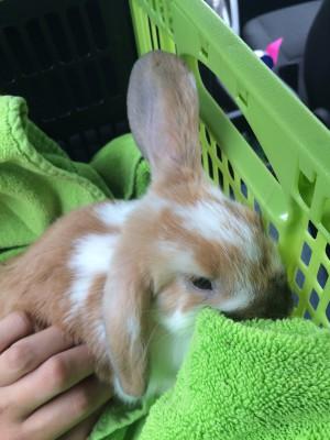 Bunny update! #1