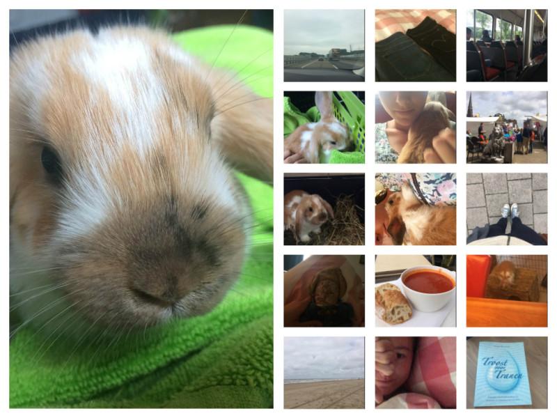 Mijn week #10: konijntjes, afspraken en broeken