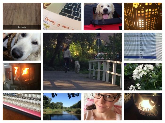 Mijn week 19 & 20: kruidnoten, tandarts en een fietsende hond