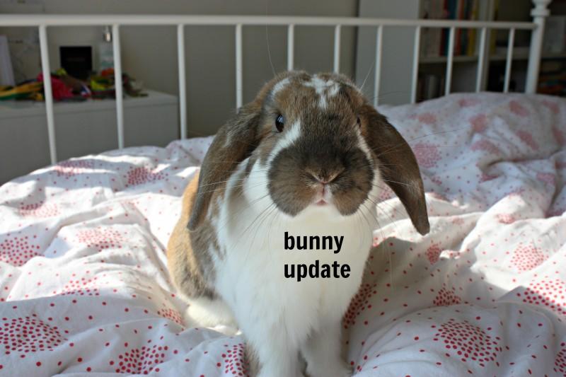 Bunny update #3: verrassing