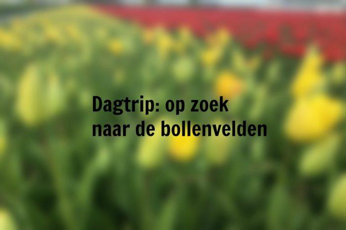 Dagtrip: op zoek naar de bollenvelden, tulpen, bloemencorso