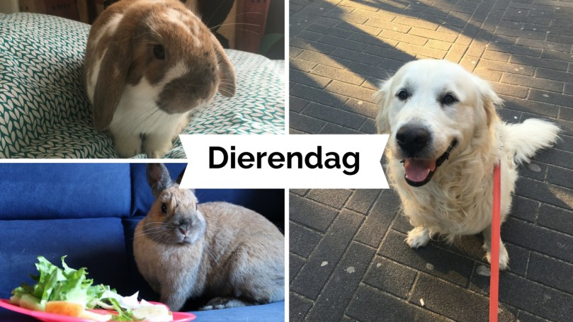 VIDEO: Dierendag