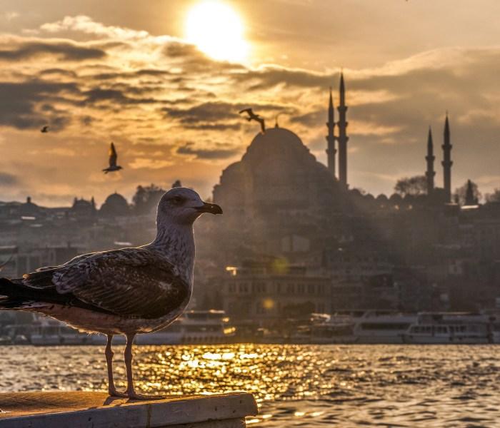 Vellykket miniferie i Istanbul