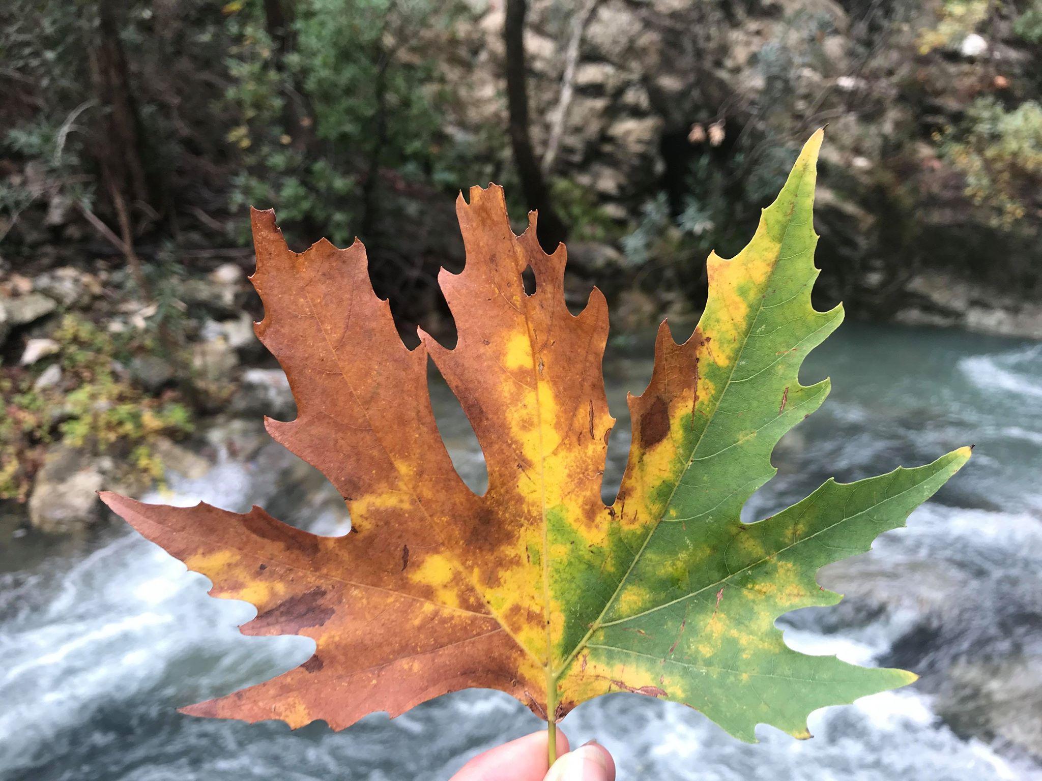 Sapadere kløften i efterårsfarver