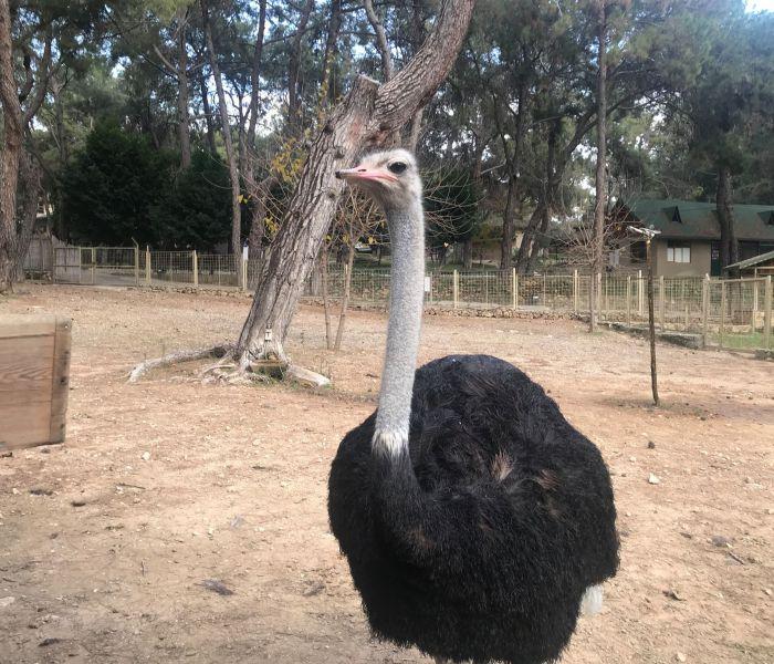 Zoologisk have i Antalya – en oplevelse for hele familien