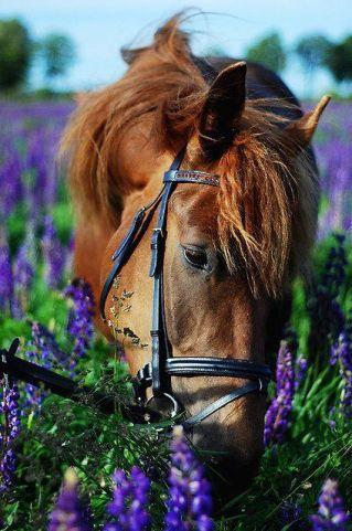 cheval-pre-fleuri-printemps