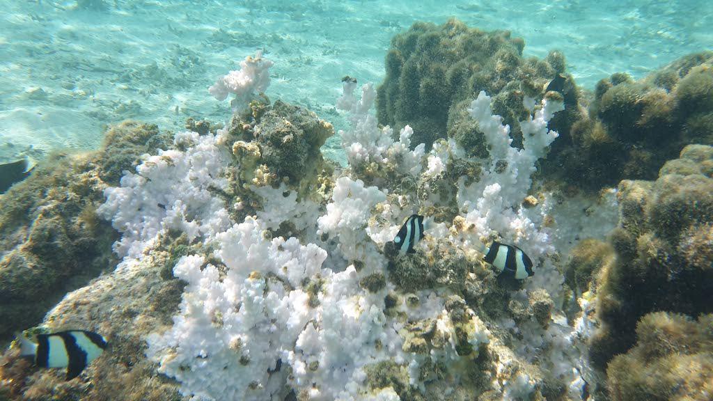 snorkeling motu raiatea