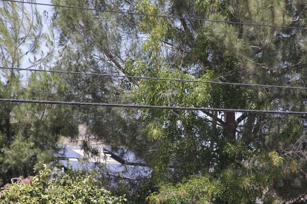 My neighbor's Sungevity solar installation today...photos! (3/6)