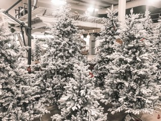 Flocked Christmas Trees and Christmas Trees Care and Maintenance.