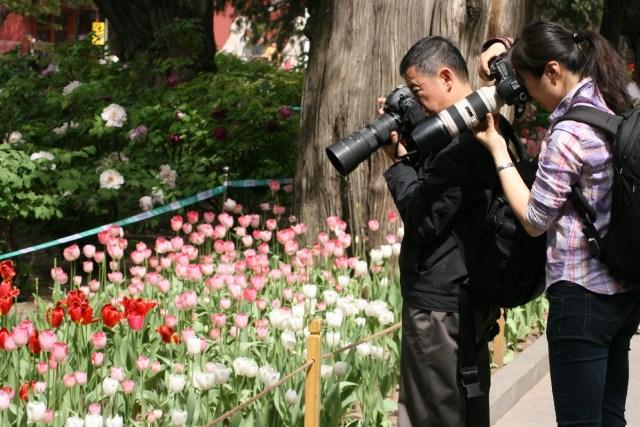 Lalele in Zhongshan 5