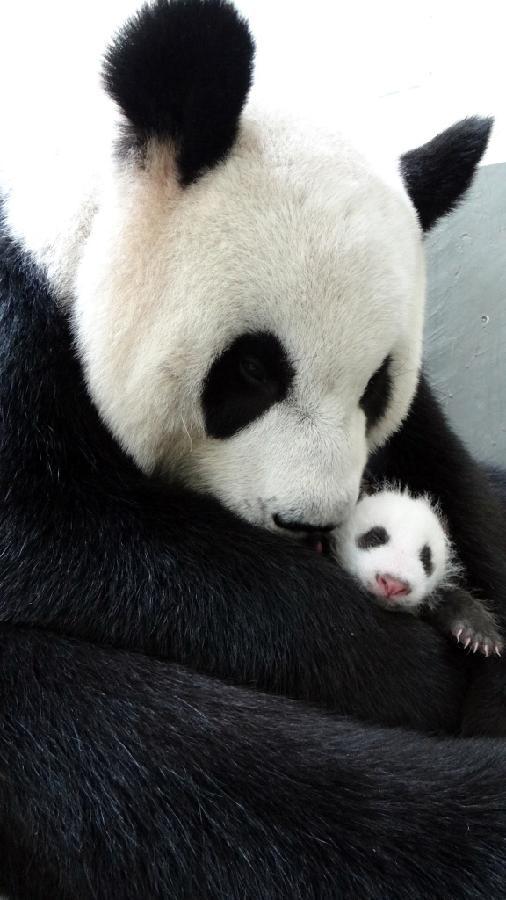Yuan Zai si-a intalnit mama 5