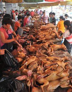 Festivalul carnii de caine 2