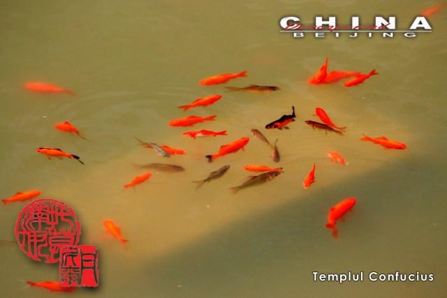 3 Templul Confucius 23