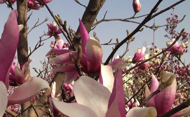Concert de Magnolie la Beijing 21
