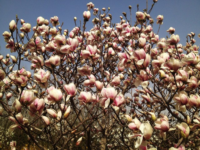 Concert de Magnolie la Beijing 4