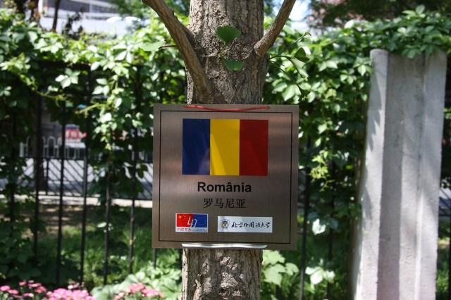 4 Copacul Romaniei, BSFU 12 mai 2015