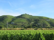 More Condrieu tiered vineyards