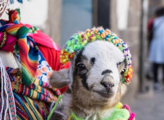 2016-05-01 ** Peru 2016 05 ** 822