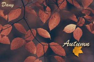 Autumn !!!
