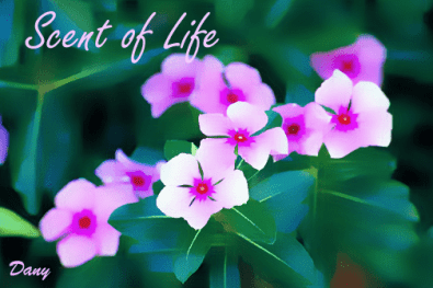 Scent of Life !!!