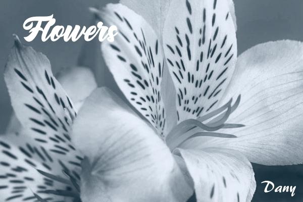 Flowers (2) !!!