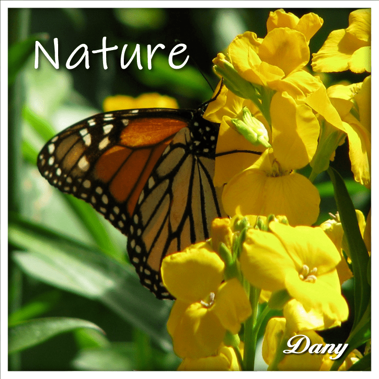 Nature #1 (Dany) (750 x 750)