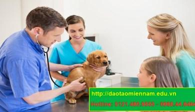 trung cấp chăn nuôi thú y tại hóc môn